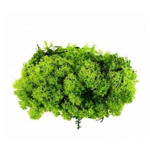 Confezione lichene 55gr